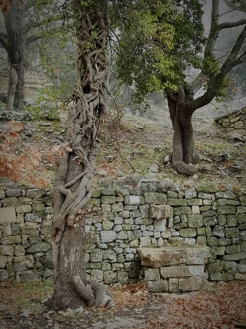 Tree Outdoors Nature Rain Source Of Water Ruins Abandoned Beauty In Nature Tree Nature Branch