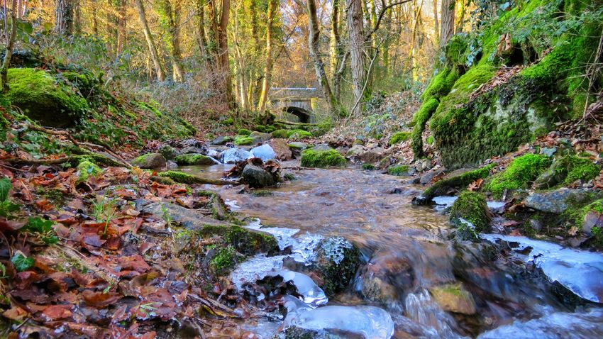 Tree Nature Beauty In Nature Water Tranquility Scenics Forest Growth Outdoors Tranquil Scene Plant Leaf No People Day Stream - Flowing Water Beautiful Colors Beautiful Winter Nature Beauty In Nature Canon Canonpowershot Canonphotography Auvergne Allier