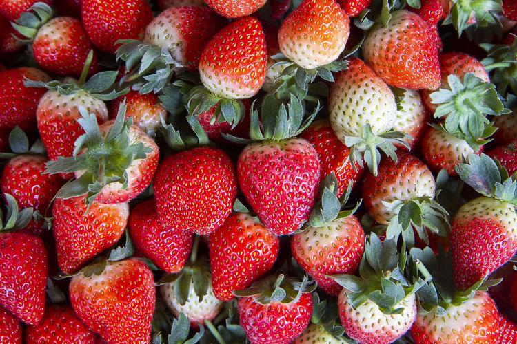 Full frame shoot bunch of fresh red strawberries background