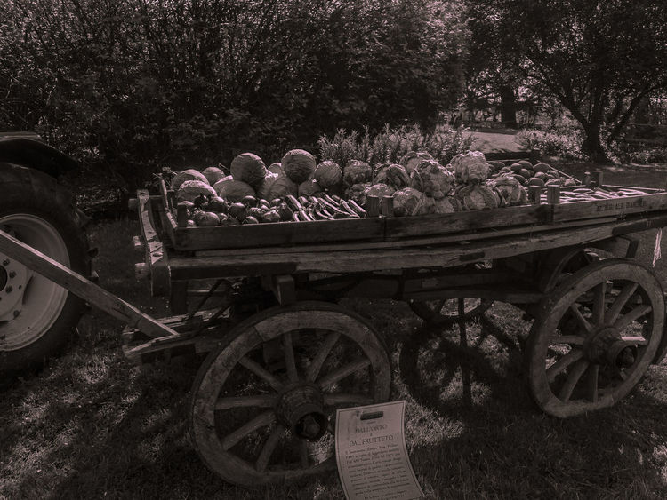 Natural Natural Light Retro Retro Style Sepia Sepia Photography Sepia Toned Vegetable Vegetables