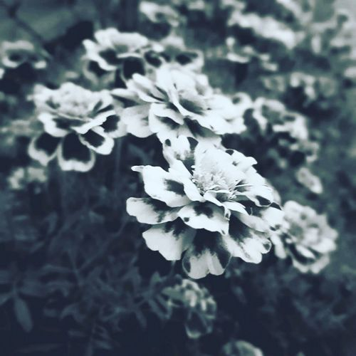 Plant Close-up Beauty In Nature Nature Outdoors No People Winter Day Leaf Flower Flower Head Freshness 3XSPUnity 3XSPhotographyUnity