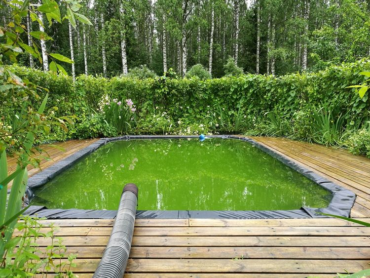 Grandmother's swimming pool 😊 Day Water High Angle View Swimming Pool Summer Reflections In The Water Outdoors Photography Landscape Nature No People Green Color Growth Nature Tree