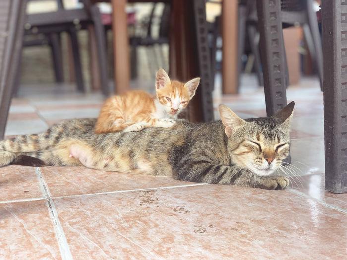 Portrait of cats resting