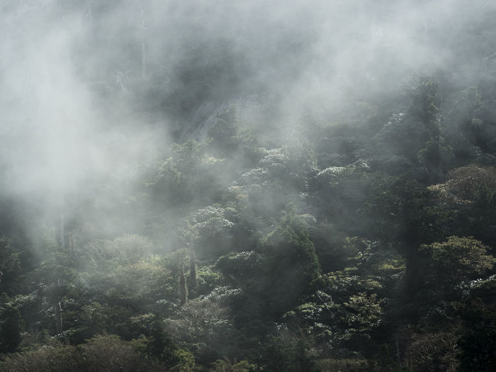 Japan Japan Photography Beauty In Nature Cloud - Sky Day Environment Fog Forest Land Landscape Mountain Nature No People Non-urban Scene Outdoors Plant Scenics - Nature Smoke - Physical Structure Tranquil Scene Tranquility Tree Yakushima