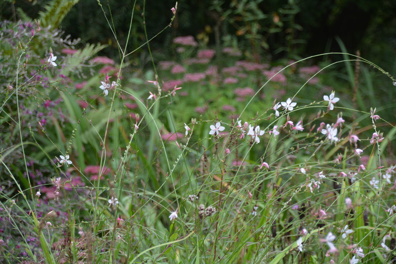 nature, flower, growth, grass, plant, fragility, no people, outdoors, beauty in nature, freshness, day, close-up