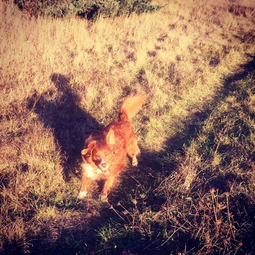 Annie Toller Nsdtr Dog