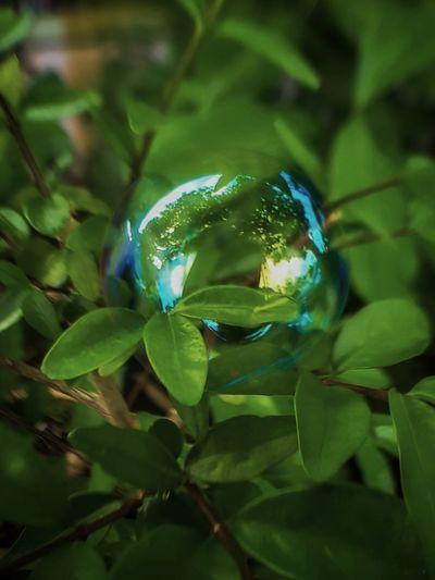 Bubble Leaf