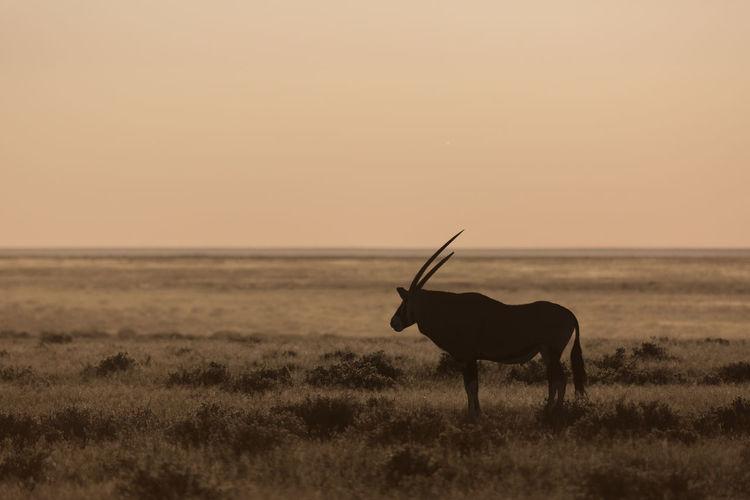 Animal Beauty In Nature Etosha National Park Landscape Mammal Namibia Namibian Nature Oryx Outdoors