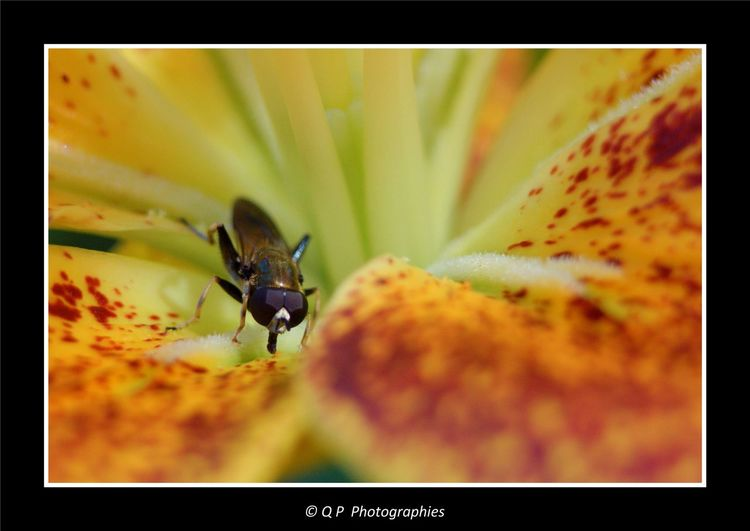 Insecte inconnu