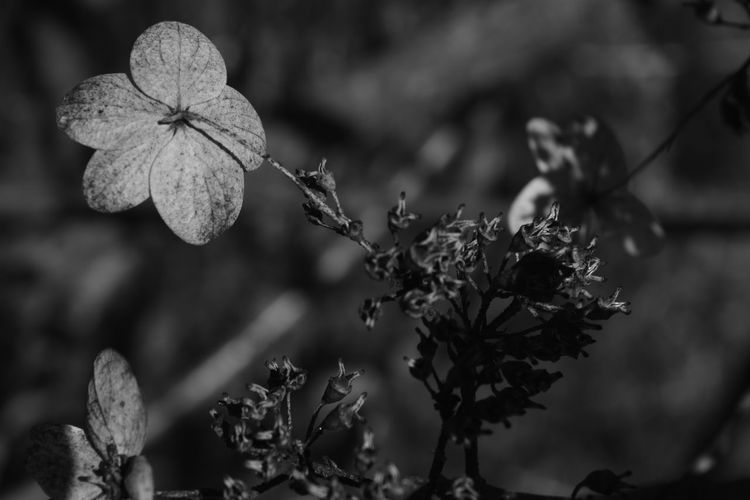 Beauty In Nature Blackandwhite Close-up Contrast Day EyeEm Gallery EyeEm Nature Lover Flower Flower Head Focus On Foreground Fragility Freshness Growth Light And Shadow Monochrome Nature No People Outdoors Plant Tree
