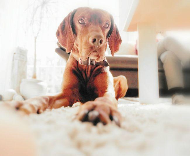 Taking Photos Relaxing Pets Corner