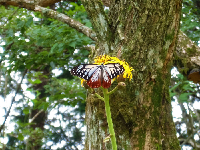 Butterfly Growth Japan Kanagawa Nature One Animal Outdoors Tree 塔ノ岳 蝶
