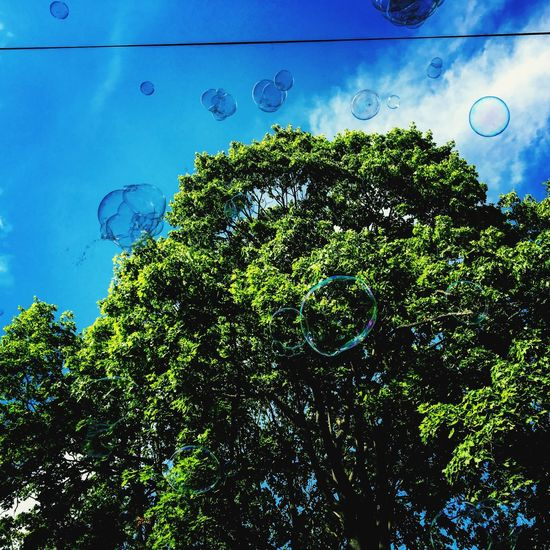 Boubles Tree Low Angle View Sky No People Day Growth Blue Outdoors Nature Planet Earth Beauty In Nature first eyeem photo