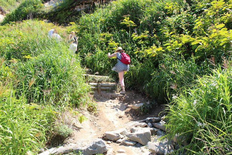 Woman Hiking Amidst Plants On Sunny Day