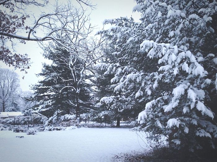 Snow Winter Nature EyeEm Nature Lover How's The Weather Today? Nature_collection View Lanscape EyeEm Best Shots Tree