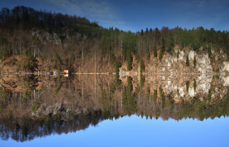 Up is Down at Alp Lake by Hohenschwangau / Bavaria . Reflection Water Lake Tree Plant Scenics - Nature Nature Sky Symmetry No People Forest Tranquility Beauty In Nature Tranquil Scene Day Animals In The Wild Waterfront Outdoors Coniferous Tree Reflection Lake EyeEm Nature Lover EyeEm Selects Nikondeutschland Landscape_photography Mirrored Panoramic Landscape Enyoing Nature Environment Travel Travel Photography Clear Water Idyllic Scenery Bavaria Blue Sky