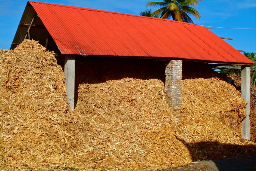 Rum Factory Sugarcane Husk Grenada Caribbean what you are looking at is the husk of sugar cane at a rum factory in Grenada the factory crushes the sugar cane manually and the waste is piled up like this.