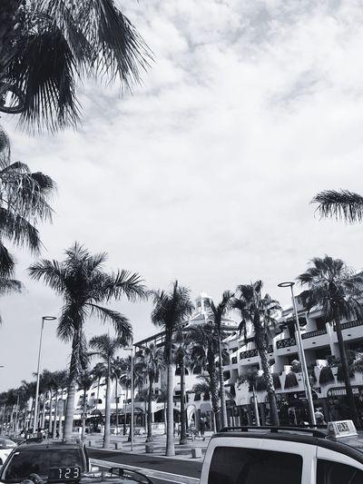 Palmtrees Palm Tree Sky Vacations