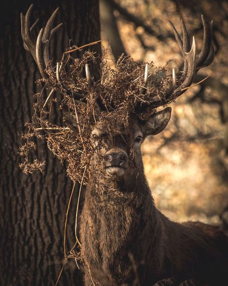 Hello there Deer Antler Animals In The Wild Animal Themes One Animal Animal Wildlife Stag Outdoors Portrait Close-up Nature No People Focus On Foreground
