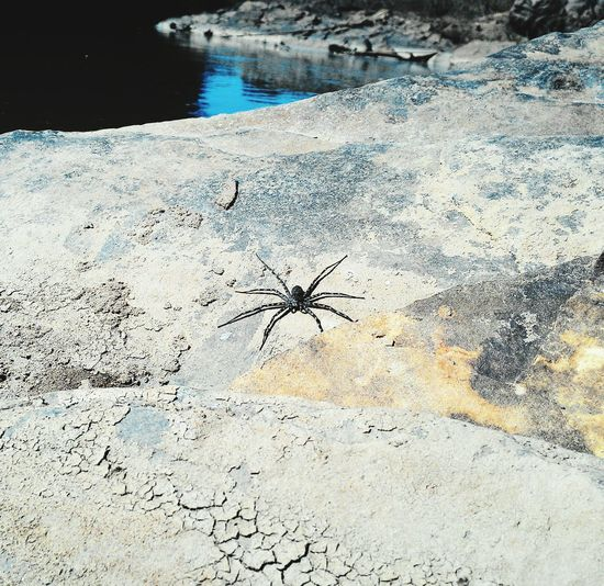 Spider Aracnofobia Mefotografo