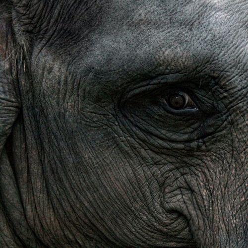 Blackandwhite Animals Eye4photography  Beautiful Indonesia