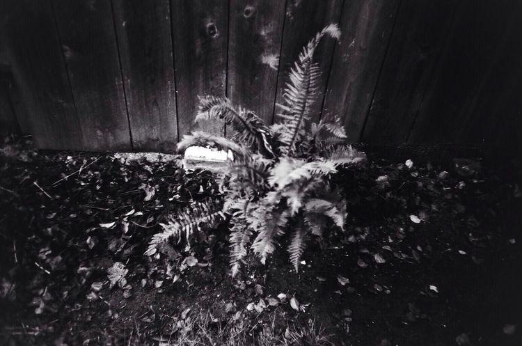35mm Film Fern Garden Blk N Wht