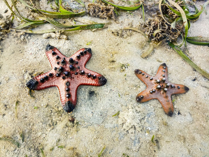 High angle view of starfish on beach