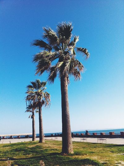 Palm Trees Palms Durres I ❤️ Albania Albania Beautiful Blue Blue Sky Skyporn The Places I've Been Today