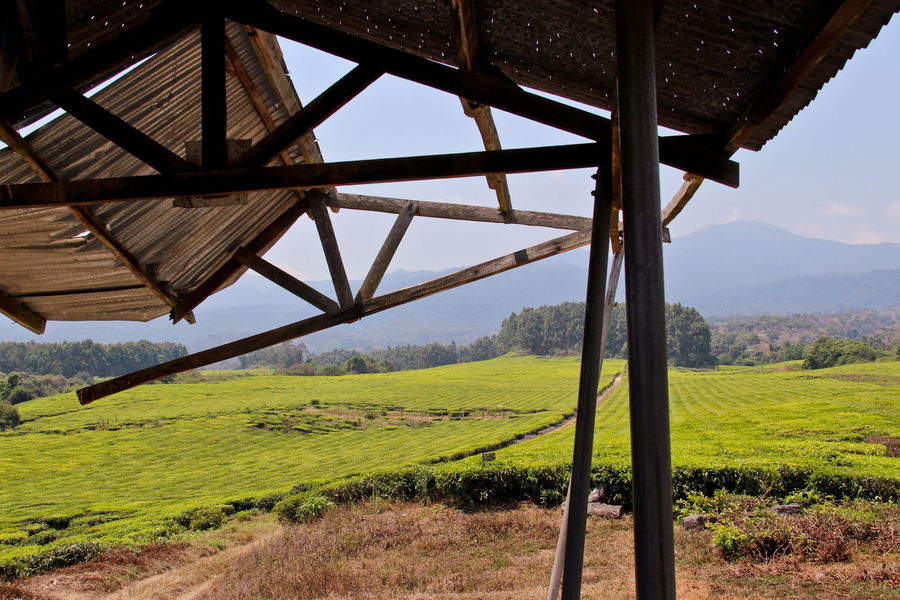 Agriculture Beauty In Nature Built Structure Crop  Day Farm Field Grass Green Color Growth Landscape Nature No People Non-urban Scene Outdoors Rural Scene Scenics Sky Tea Plantation  Tranquil Scene Tranquility Tree