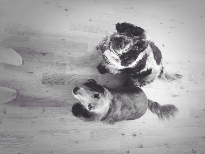 Tiggere Love Dogs Snillehunder