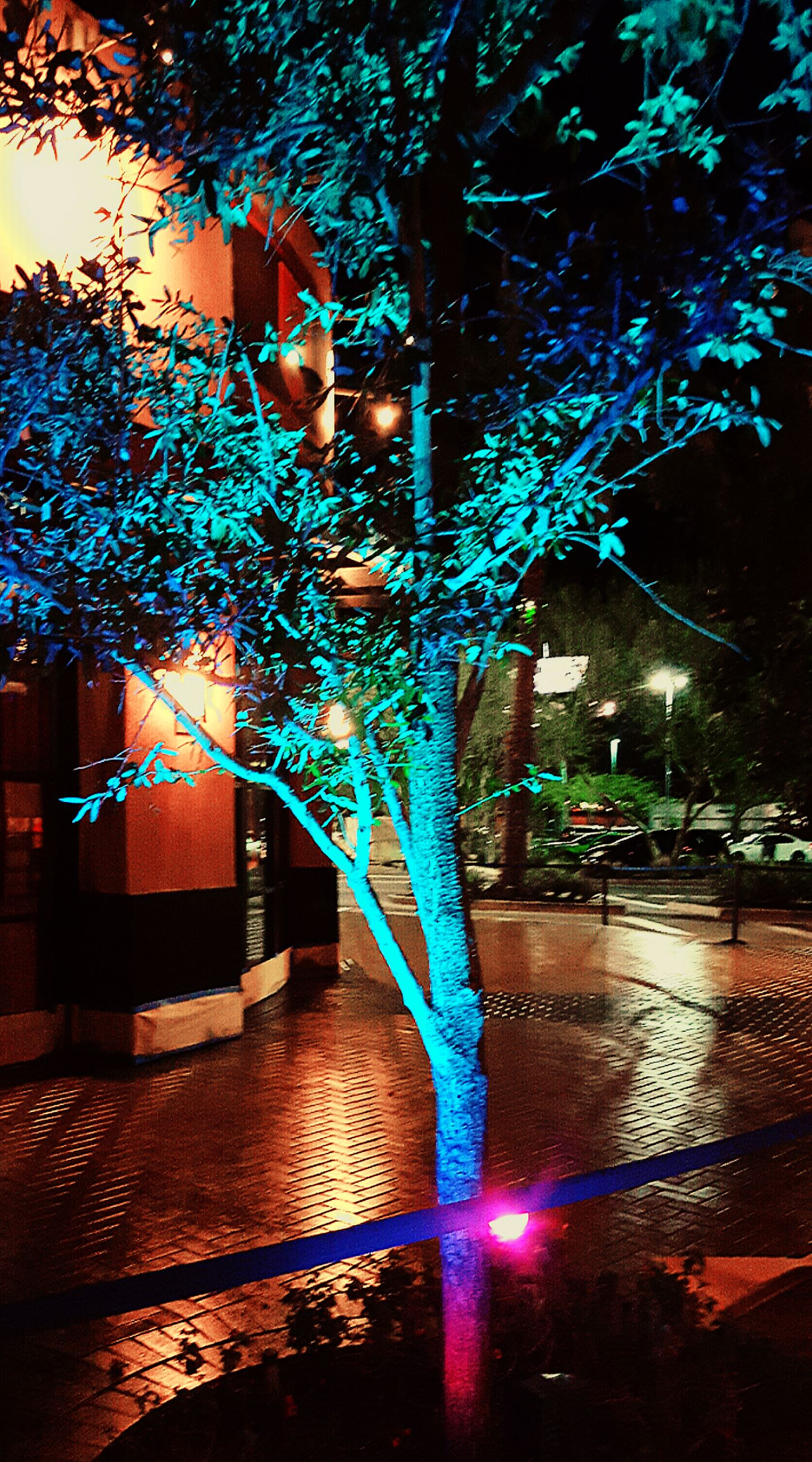 illuminated, tree, water, night, reflection, street light, branch, built structure, lighting equipment, architecture, building exterior, street, outdoors, no people, city, sunlight, light - natural phenomenon, nature, multi colored, motion