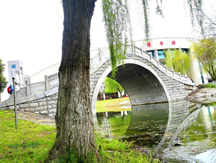 One Person Tree Built Structure Stone Arch Bridge Lake Water City China In My Eyes