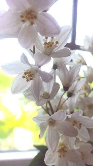 Flower Nature Blossom Plant Beauty In Nature Freshness