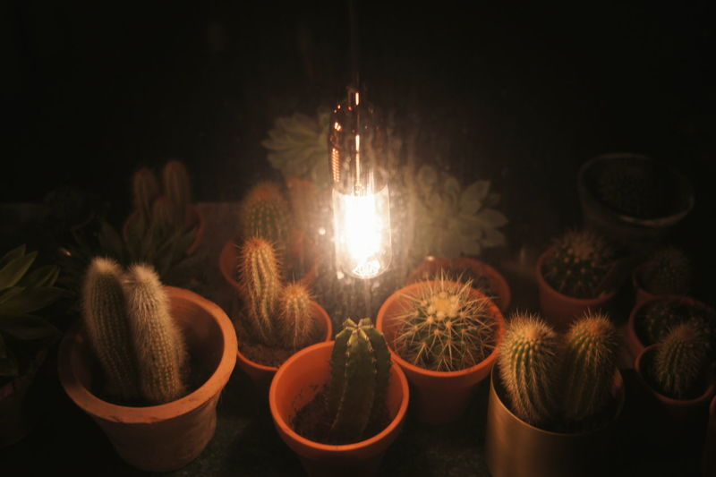Bench Bulb Bulb Light Burning Cactus Cactus Garden Close-up Cultures Diya - Oil Lamp Edison Bulb Flame Flower Heat - Temperature Indoors  Night Nightlight No People Plant Plants Romantic Wallpaper Window