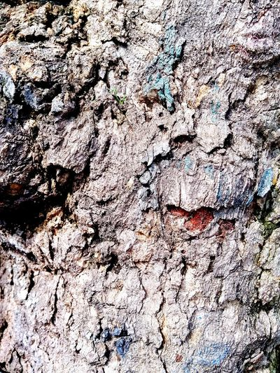 beautiful texture art of the trees Tree Trees Tree Texture Tree Texture Ground Tree Textures Ink Backgrounds Full Frame Textured  Pattern Abstract Paint Close-up