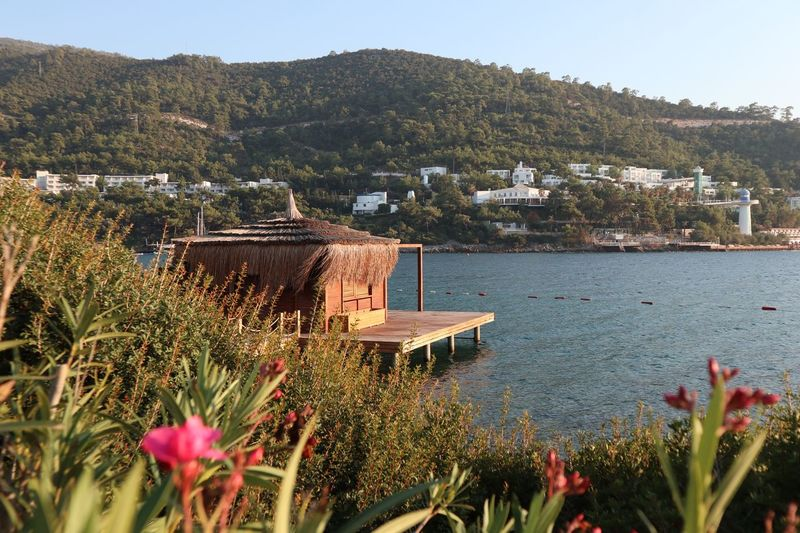 Beachlife Travelphotography Sea Rixos Bodrum Plant Water Growth Nature Beauty In Nature Flower Flowering Plant Tranquility