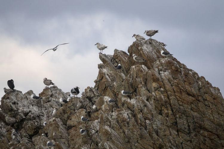 View of Janghohang, Samcheok, Gangwondo, South Korea Day Janghohang Outdoors Rock Sea Seagull Seaside
