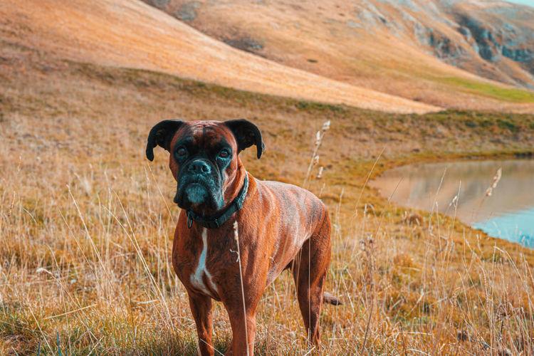 Portrait of dog standing on landscape