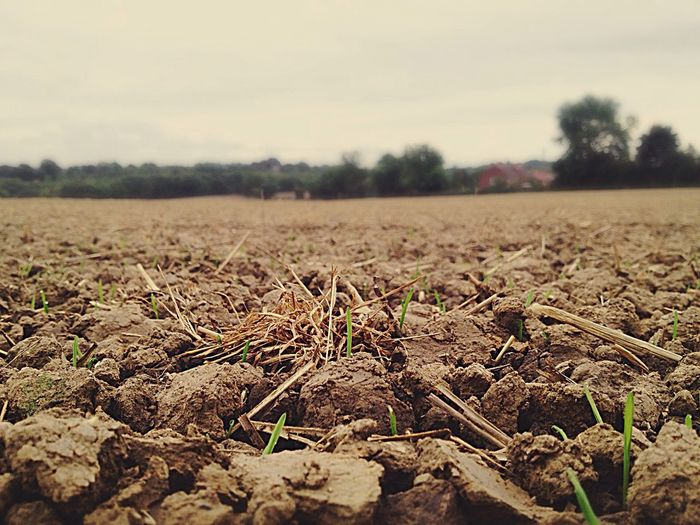 Landscape Field Dry Focus On Foreground Growth Plant Nature Rural Scene Sky Tranquility Scenics Agriculture Farm Non-urban Scene Crop  Beauty In Nature Outdoors Walking Around