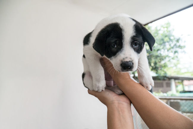 puppy dog Animal Themes Close-up Day Dog Domestic Animals Friendship Holding Human Body Part Human Hand Lifestyles Mammal One Animal One Person Outdoors People Personal Perspective Pets Puppy Real People Young Animal