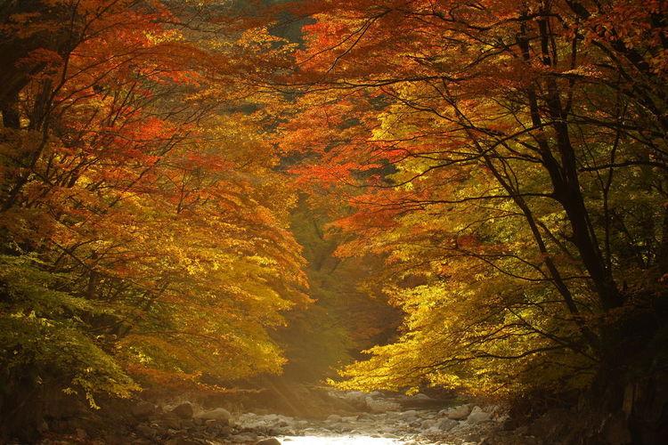 大芦渓谷 水辺の風景 山の風景