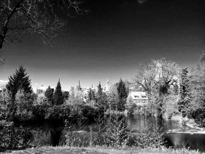 Blackandwhite Black & White Unforgettable ♥ Unforgettable Moment Tree Pixelated Sky