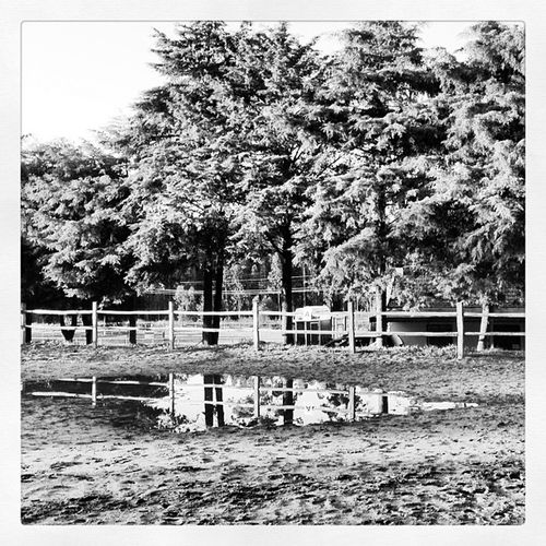 #quiaios #centrohipicofigueiradafoz #figueira #figueiradafoz #chff #igers #igersfigueira #igersportugal #igers_portugal #igersportugal_minhacidade#portugaligers #portugal_lovers #portugaldenorteasul #portugaloteuolhar #cavalos #horses #picoftheday #pictur Figueira Igers_portugal Igersfigueira Photography Quiaios Horses Figueiradafoz Iphoneonly Portugaligers Photooftheday Igersportugal Instagram Portugaldenorteasul Picoftheday Iphonephotography IPhone5 Instagramania Instamood Portugaloteuolhar Cavalos Igersportugal_minhacidade Igers Instagramhub Pictureoftheday Chff Instaday Centrohipicofigueiradafoz Iphoto Portugal_lovers
