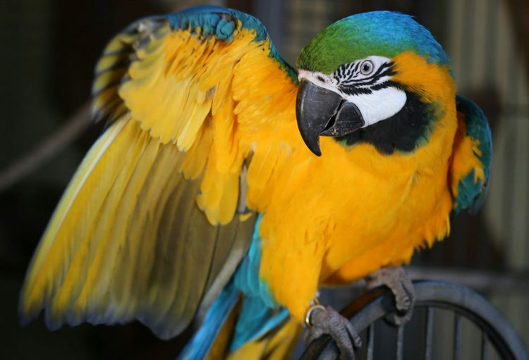 Beautiful Macaw Sammy:) Getting Inspired OpenEdit Colourful
