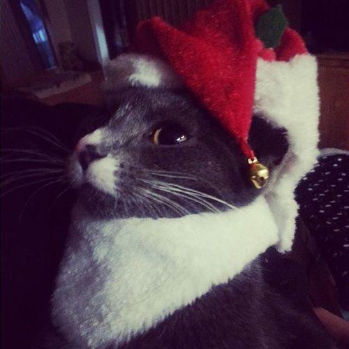 Christmas Kitty! Mickey Fur Baby Cute Pets