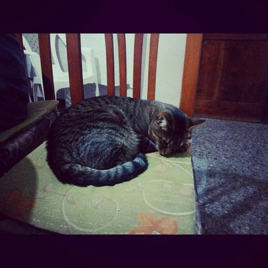 Cat😻 Pets🐱 Sleeping 💤💤