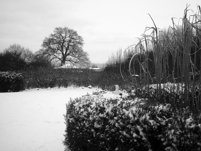 Finally, it's winter! The Oak Tree in the back is more than 350 years old and it lives right next to the beautiful Achterwasser. Monochrome Hugging A Tree Hello World