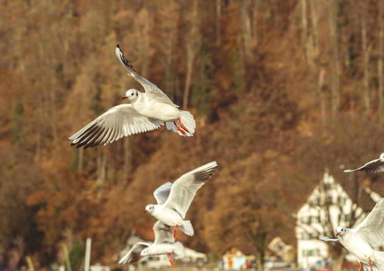 Seagull Flying Bird Spread Wings Animal Wing Animal Wildlife Animals In The Wild Animal Themes Nature Motion Outdoors No People Day Photography Seemöwe Seagull Animals In The Wild Animal Walenstadt Sony A6000 Etifumi
