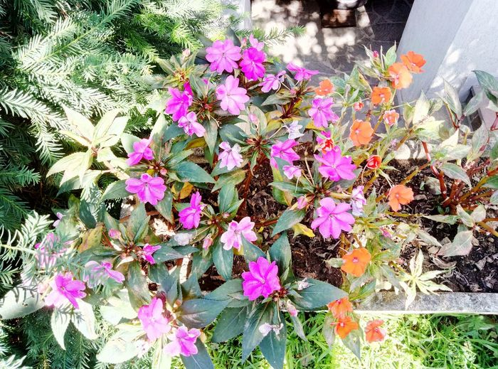 Flower Growth Nature Plant Outdoors Petal Flower Head Freshness Fragility Shadow Violet And Orange Flowers