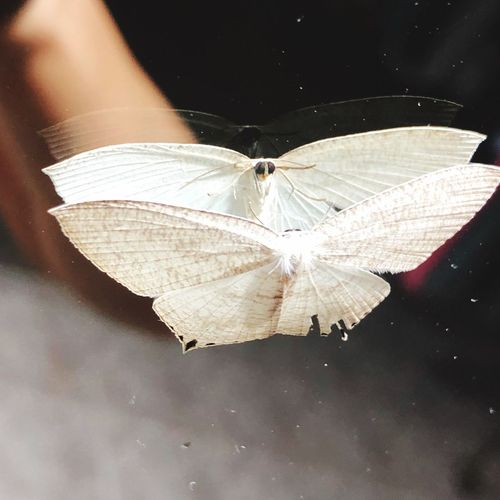 กระจกเงา One Animal Invertebrate Animal Wildlife Animals In The Wild Butterfly